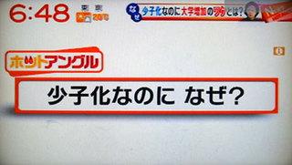 yajiuma1.jpg